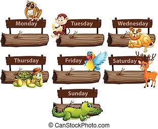 vecka, många, djuren, dagar