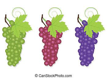 vecteur, écologie, raisin, fond