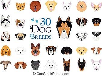 vecteur, 30, collection:, espèces, dessin animé, style., chien, ensemble, différent