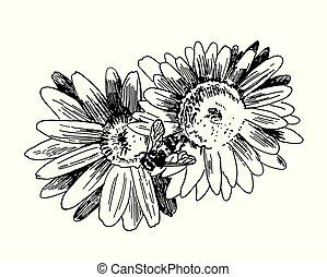 vecteur, abeille, collects, croquis, main, dessiné, miel, flowers.