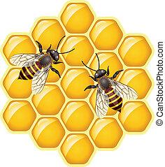 vecteur, abeilles, sur, honeycells