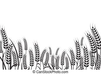 vecteur, agriculture, blé, conception, illustration