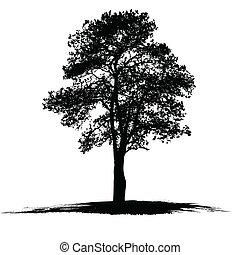 vecteur, arbre, dessin