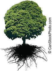 vecteur, arbre, sien, racines