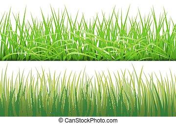 vecteur, arrière-plans, isolé, illustration, herbe, fond, vert, 2, blanc