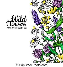 vecteur, artistique, usines, dessin, pré, isolé, leaves., herbier, fleurs, set., sauvage