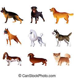 vecteur, blanc, ensemble, isolé, chiens