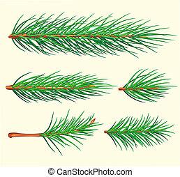 vecteur, brosse, pin, branches.