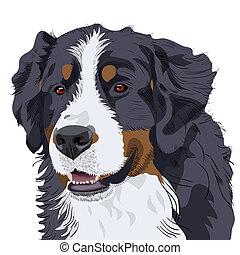 vecteur, chien montagne bernese, race