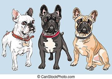 vecteur, chiens, bouledogue, ensemble, francais