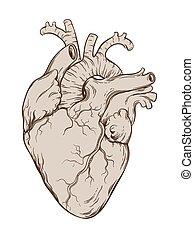 vecteur, coeur, humain