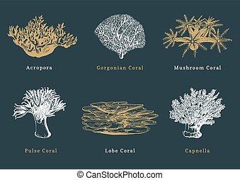 vecteur, collection, sombre, arrière-plan., corals., mer,...