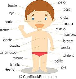 vecteur, corps humain sépare, vocabulaire, illustration, ...