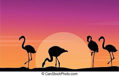 vecteur, coucher soleil, flamant rose, silhouette, scène