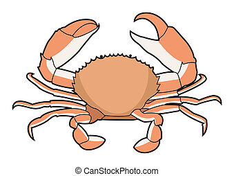 vecteur, crabe, nourriture, illustration, mer