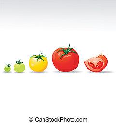 vecteur, croissant, tomates