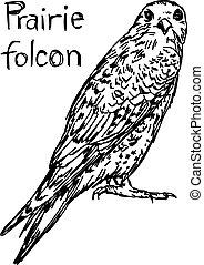 vecteur, croquis, folcon, -, isolé, illustration, main, lignes, prairie, arrière-plan noir, dessiné, blanc