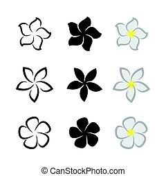 Dessin Fleur Exotique Noir Et Blanc