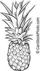 vecteur, dessiné, fruit, pineapple., main