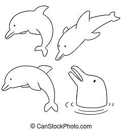 vecteur, ensemble, dauphin