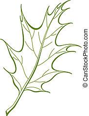 vecteur, feuille chêne, ibérique