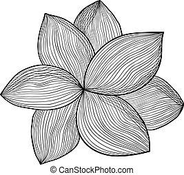 vecteur, fleur