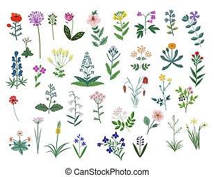 vecteur, fleurs, ensemble