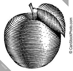 vecteur, gravé, pomme, illustration, isolé
