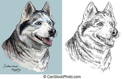 vecteur, husky, monochrome, portrait, dessin, main, coloré, sibérien