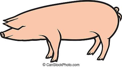 vecteur, illustration, cochon