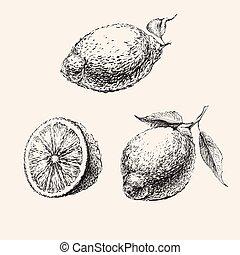 vecteur, main, croquis, citrons, ensemble, dessiné, illustration