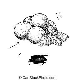 vecteur, main, mozzarelle, dessiné, bébé, drawing., fromage