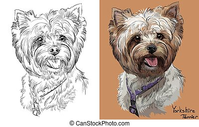 vecteur, monochrome, portrait, dessin, yorkshire, main, coloré, terrier