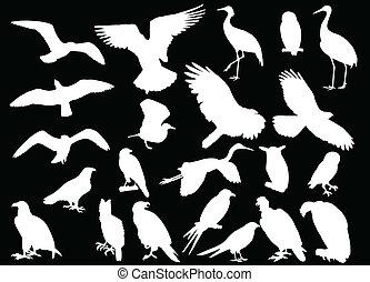 vecteur, -, oiseau, collection