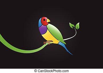vecteur, oiseau, coloré