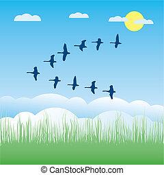 vecteur, oiseaux, illustration, migrateur