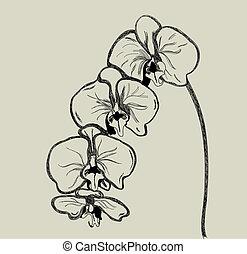 vecteur, orchidée