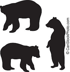 vecteur, ours
