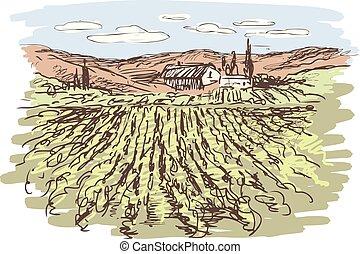 vecteur, paysage., croquis, vignoble