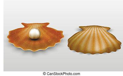 vecteur, perle, coquille