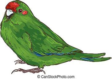 vecteur, perroquet, fond, blanc, vert, illustration