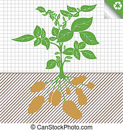 vecteur, plante, concept, buisson, pomme terre