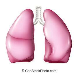 vecteur, poumons, humain