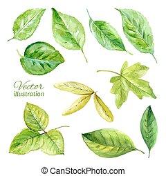 vecteur, printemps, feuilles, ensemble, watercolor.