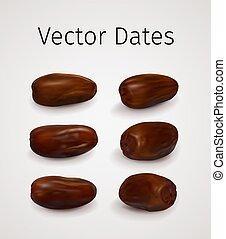 vecteur, réaliste, dates, ensemble, fruit