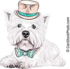 vecteur, région montagneuse, chien, chapeau, ouest, race, arc, blanc, cravate, terrier