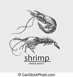 vecteur, resident., marin, style., shrimp., croquis