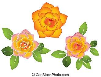 vecteur, roses, ensemble, -