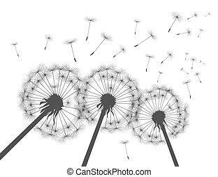 vecteur, silhouette, gris, dandelions., illustration.