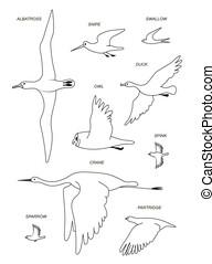 vecteur, silhouette, image, dessin, birds., contour, set.